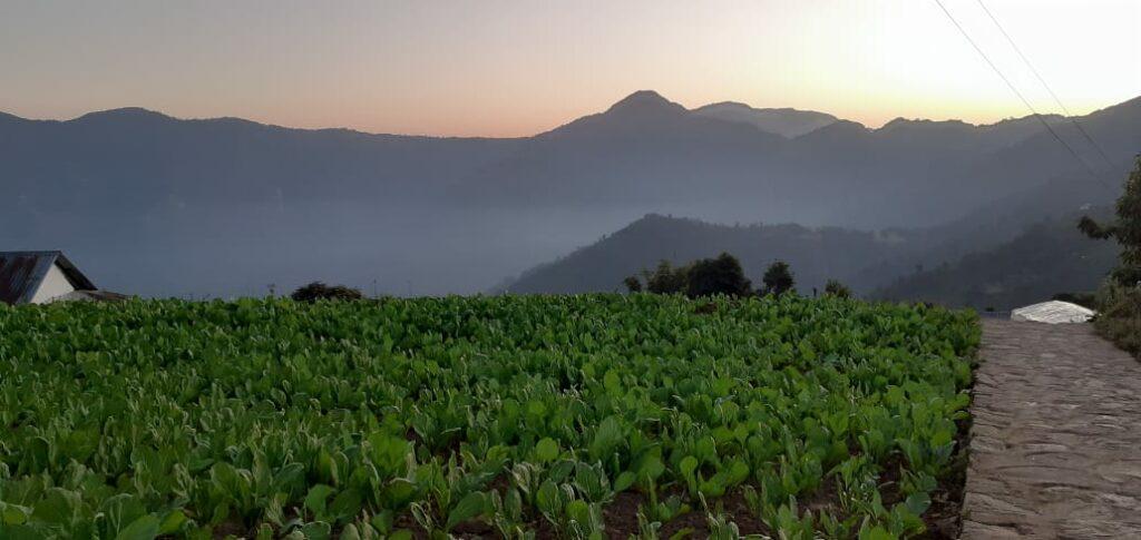 farmland in Nepal
