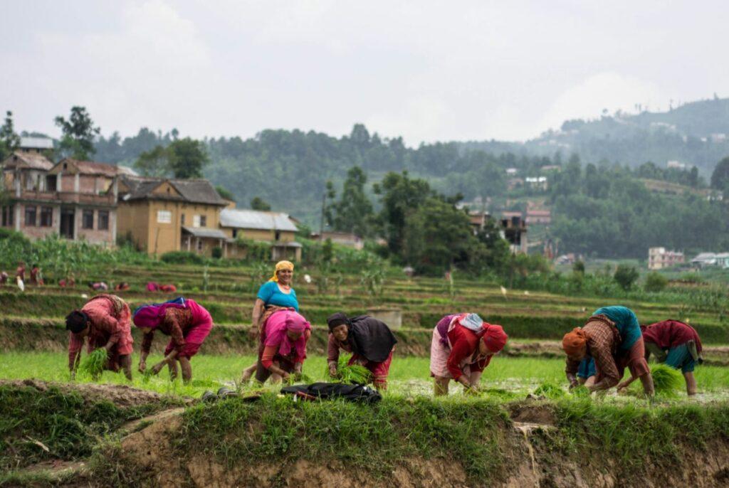 Local women farming in Panauti