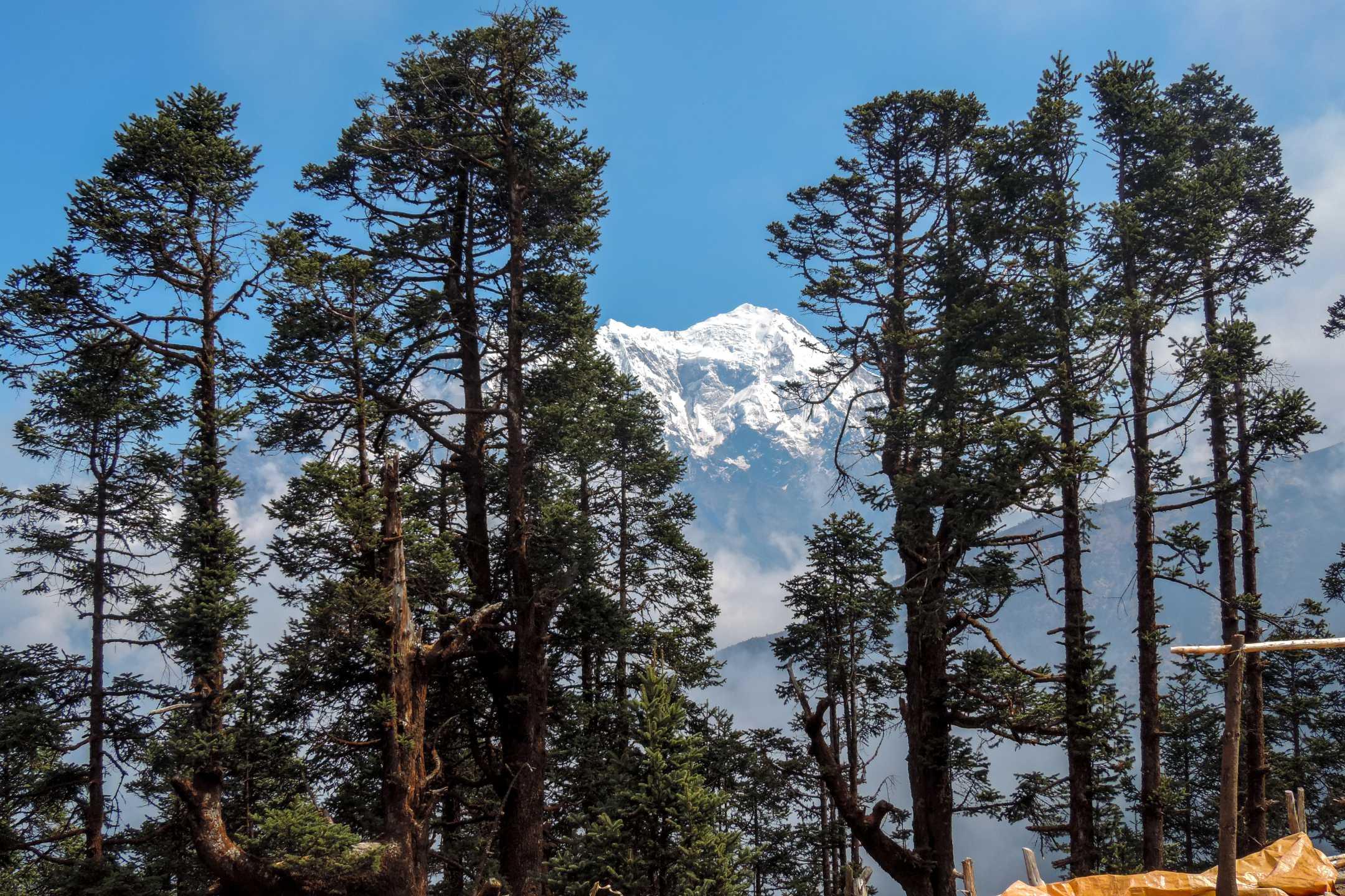 Tamang mountains and trees