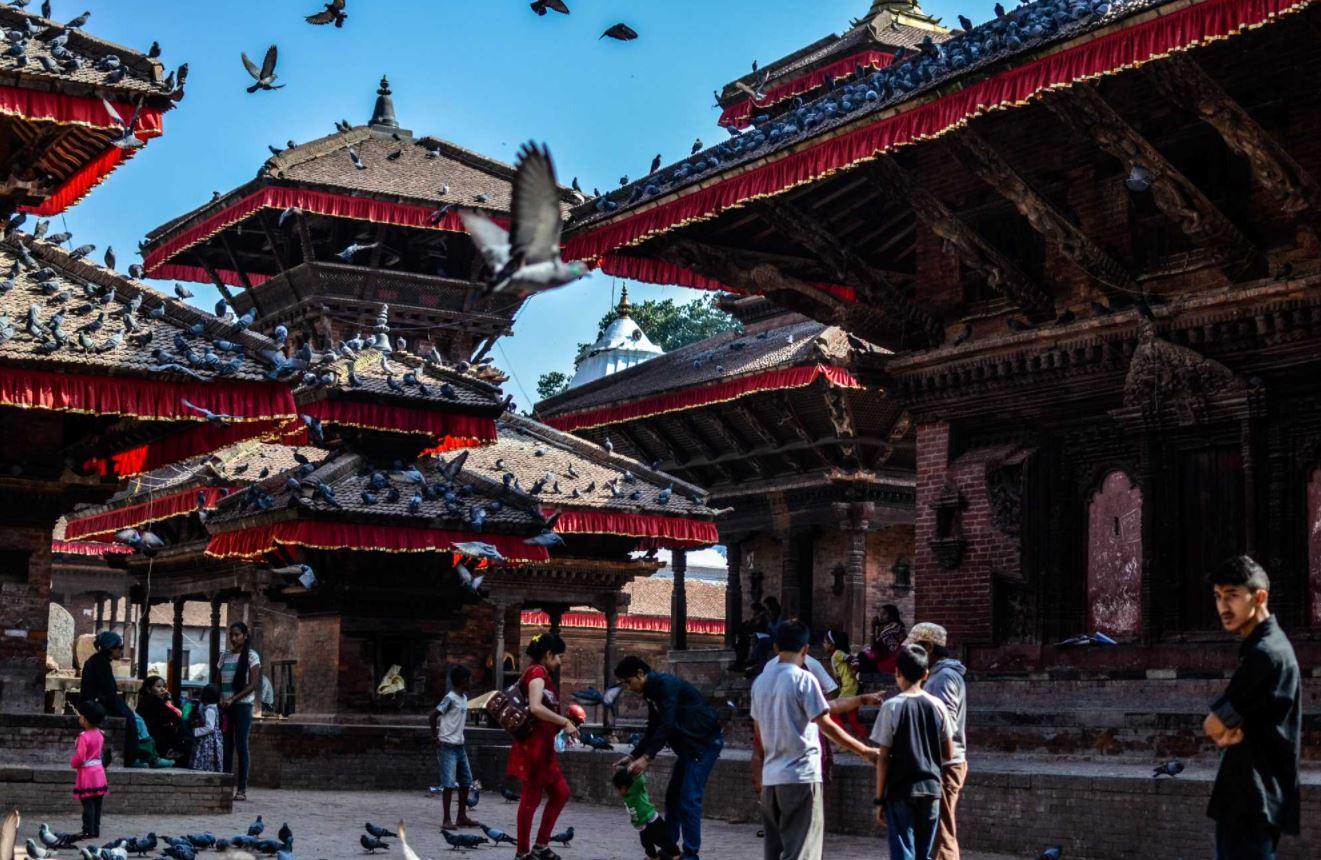 Pigeons at a temple in Kathmandu
